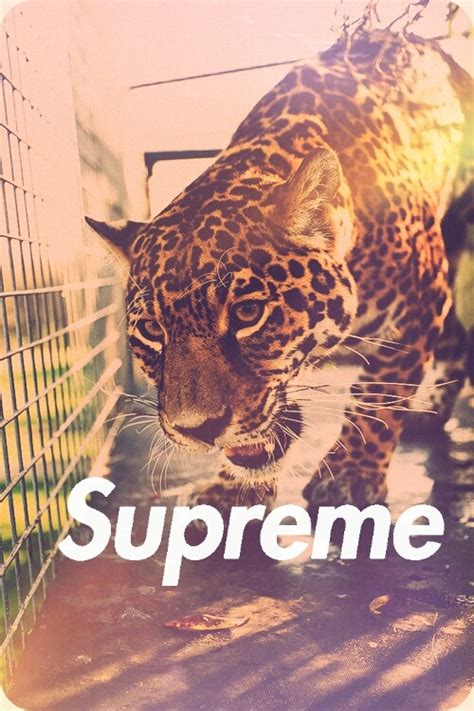 wallpaper tumblr supreme supreme wallpaper tumblr