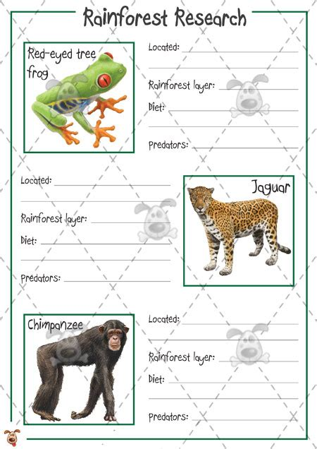 fact card template ks1 s pet rainforest animal research colour