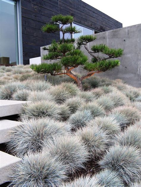 modern landscape best 25 modern lawn and garden ideas on