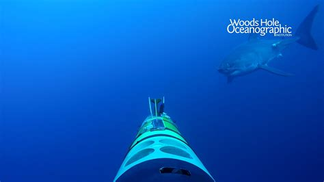 whois  ocean themed virtual backgrounds woods hole oceanographic institution