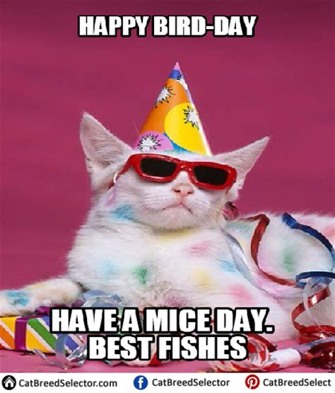 Birthday Cat Meme - happy birthday cat memes cat breed selector
