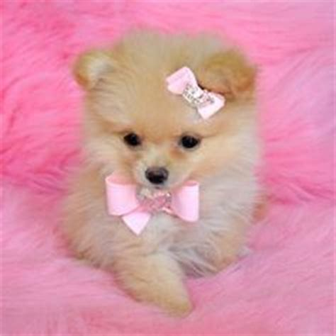 Small Stay At Home Dogs 1000 Images About Puppies On Teacup