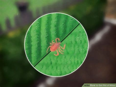 rid  mites  steps  pictures wikihow