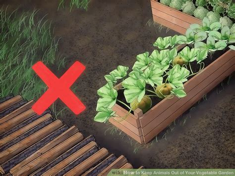 3 vegetables keeping you 3 ways to keep animals out of your vegetable garden wikihow