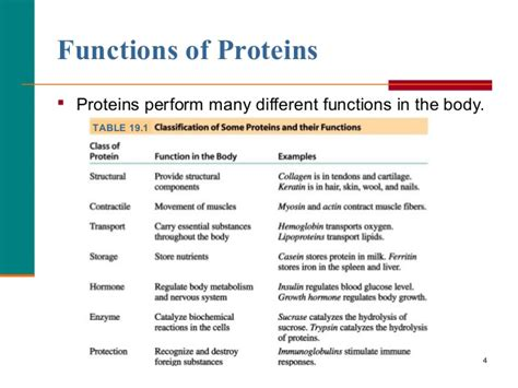4 proteins and their functions proteins biochemistry
