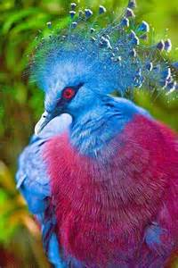 big colorful bird 17 of 2017 s best birds ideas on pretty