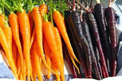 Wich Of The Week Estelas The Carrot by Baked Baby Carrots With Goat S Cheese Pomegranate Couscous