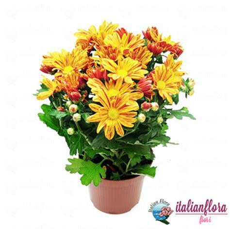 consegna fiori in italia fiori italia consegna fiori a domicilio italia