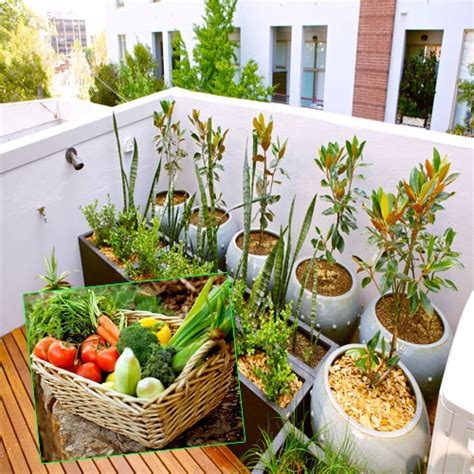 vegetables you can eat 10 vegetables eat once and regrow forever slide 1 ifairer