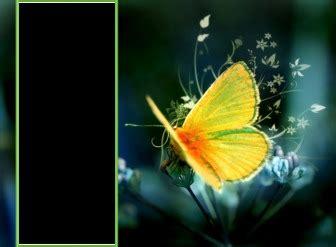imagenes de mariposas posadas en flores fondo de pantalla para dos fotos con una mariposa amarilla
