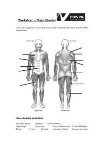 Labeled muscle diagram human body worksheet
