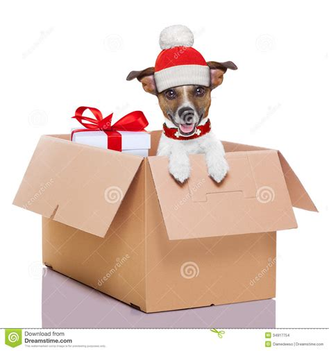 winter christmas dog stock photo image of deliver moving