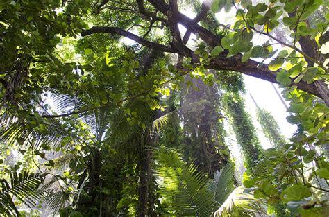 jungle canopy jungle canopy photograph by daniel murphy