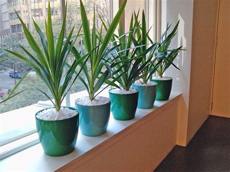 Best Plants For Indoor Window Sills 32 Best Images About Office Plants On