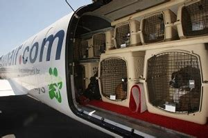 United Airlines Dogs In Cabin by Voyager Avec Animal Conseils Voyager Avec Chien