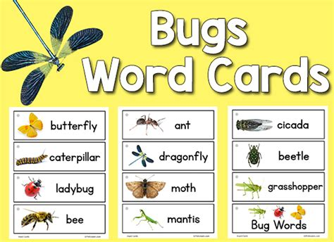printable insect flash cards insect picture word cards prekinders