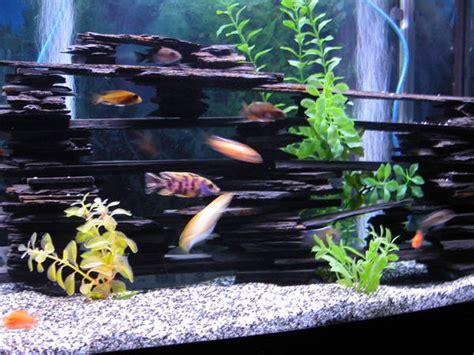 aquarium design using slate slate fis hides paws pinterest slate and fish