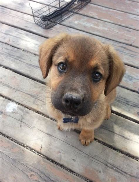 really puppy pin dogs image search results on