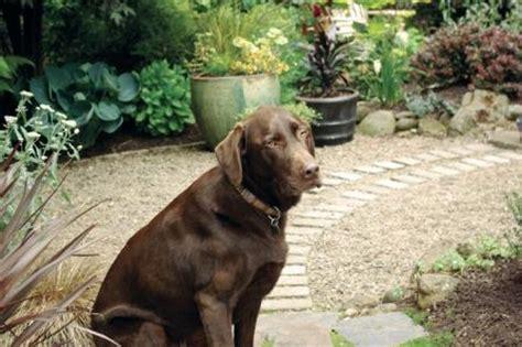 do dogs need grass backyard creating a dog friendly water efficient yard spot magazine