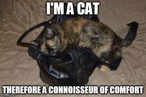 Comfort Memes - cat connoisseur of comfort imgflip