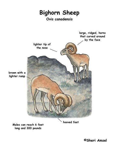 sheep diagram search results for label the parts of the