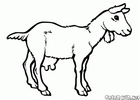 sheep coloring pages coloring page sheep and goats
