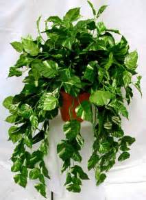 Low Light Hanging Plants Indoors by Facts About Low Light House Plants Interior Office Plants