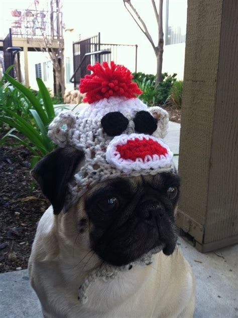 pug vet bills 1000 images about hates hates hates on monkey hat plays and for dogs