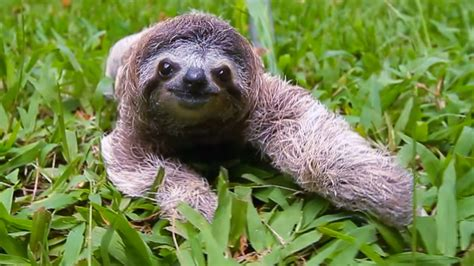 sloths  popular  days  edition