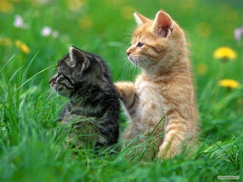 perawatan kucing  mudah  merawat kucing