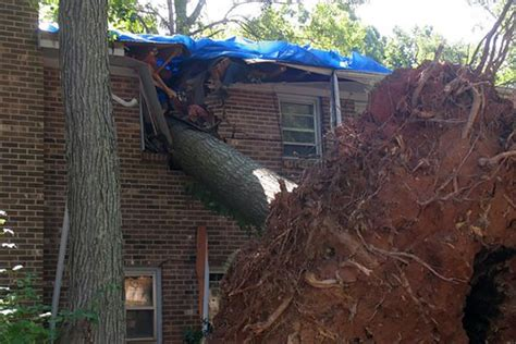 insurance tree falls neighbors house tree fall property line property line tree damage houselogic