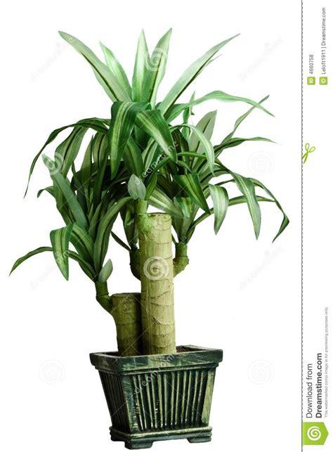 plante de chambre plante verte de chambre photos libres de droits image