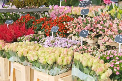 Flowers For Sale by Flowers For Sale At A Flower Market The Netherlands
