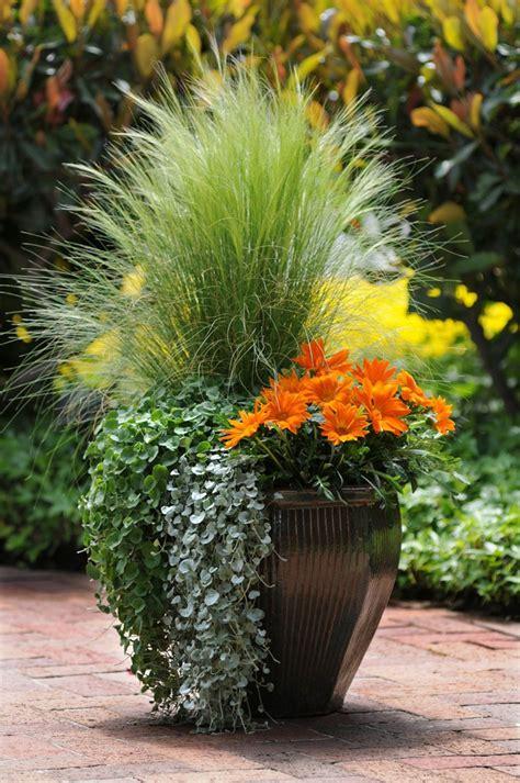 piante da giardino piante da giardino idee per un nuovo look veramente originale
