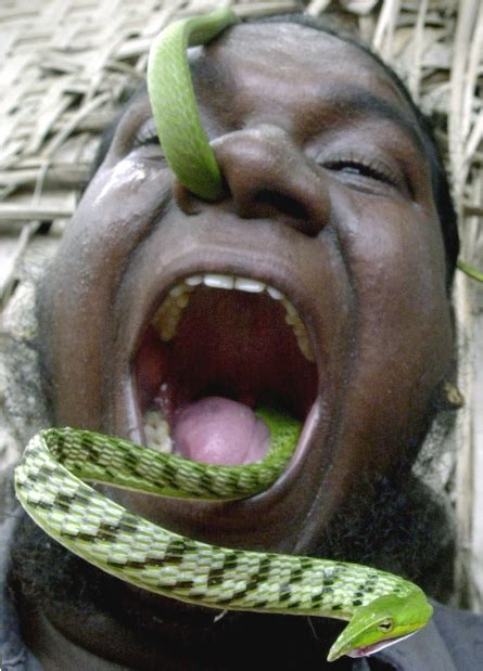 guinness world records largest guinness world records snake www pixshark images galleries with a bite