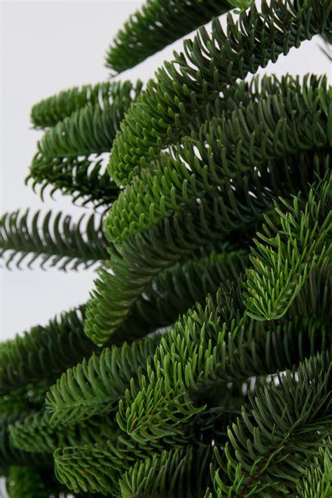 nobilis tannenbaum 120cm bis 210cm spritzguss 100 pe