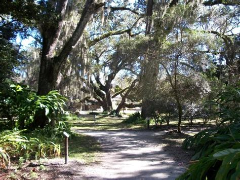 Sugar Mill Botanical Gardens Oak Tree Picture Of Dunlawton Sugar Mill Gardens Port Orange Tripadvisor