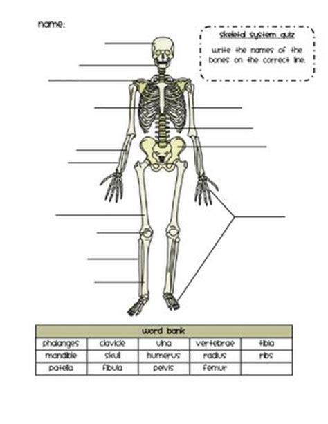 skeleton diagram quiz skeletal system quiz 7th grade science
