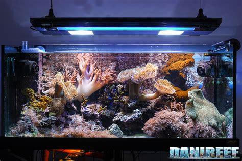 vasca acquario marino la vasca di maurizio zannoni quot zanna quot danireef