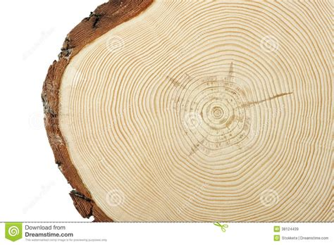 wood cross section wood cross section royalty free stock images image 38124439