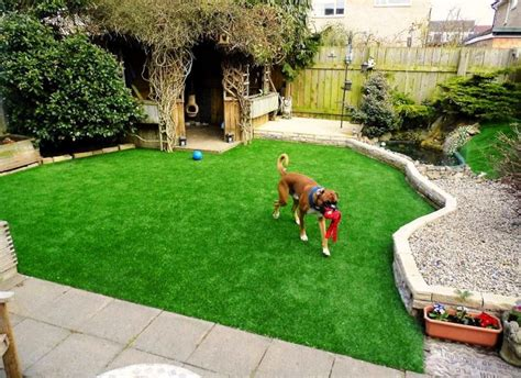 best grass for dogs best grass for dogs choosing the best grass for dogs