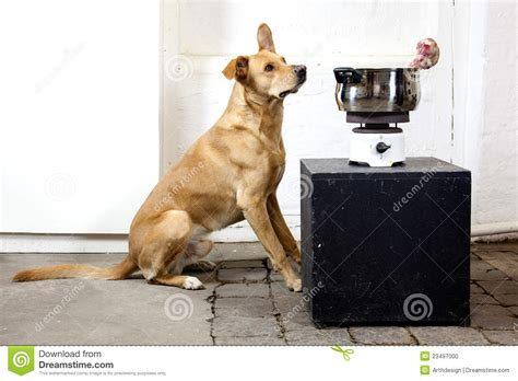cooking dogs on stove with an cook stove stock photo image 23497000