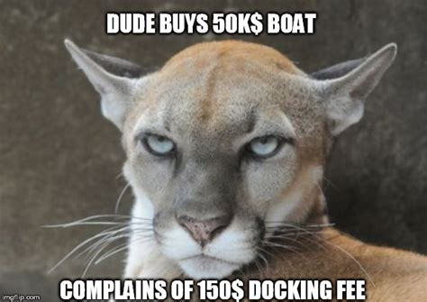 Memes Pumas - annoyed puma docking fees imgflip