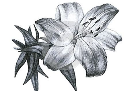disegni a matita fiori disegni a matita di fiori disegni da colorare fiori