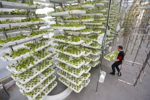 Indoor Hydroponic Herb Garden - to feed humankind we need the farms of the future today