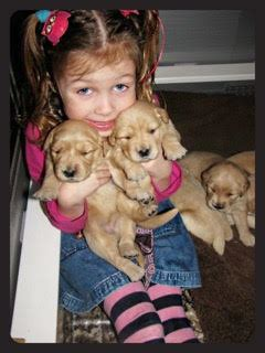 new hshire golden retriever breeders new hshire golden retriever breeders assistedlivingcares