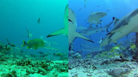 gopro vs new srp and backscatter filters for dive