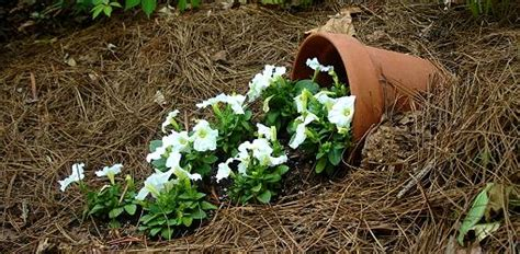 how to make a flower garden how to make a spill pot today s homeowner