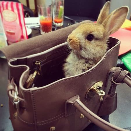 Rrrribbit In My Bag by Prince Spot 187 Animals In Designer Bags