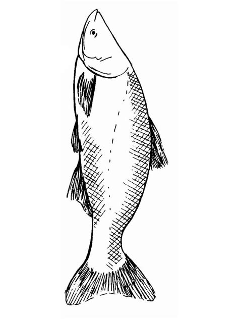 carp fish coloring pages carp coloring pages download and print carp coloring pages